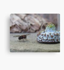 Fruit fly and gum nut helmet. Canvas Print