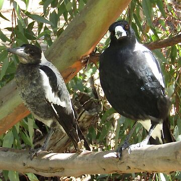 Magpie mum with baby. by malleus
