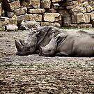 Resting Rhino ... by SNAPPYDAVE