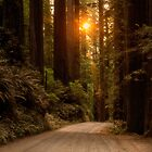 Sunrise in the Redwoods by Kathy Weaver