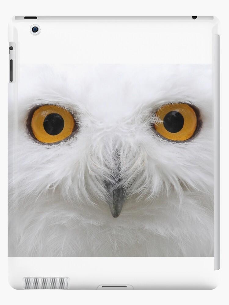 Snowy Eyes - Snowy Owl by Jim Cumming