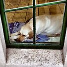How much is that doggy in the window? by SNAPPYDAVE