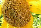 Bug On Sunflower by Stephen Thomas