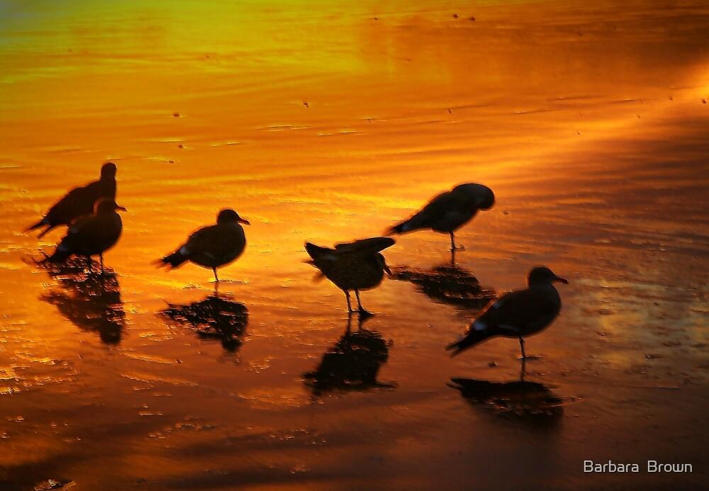 Shore Birds by Barbara  Brown