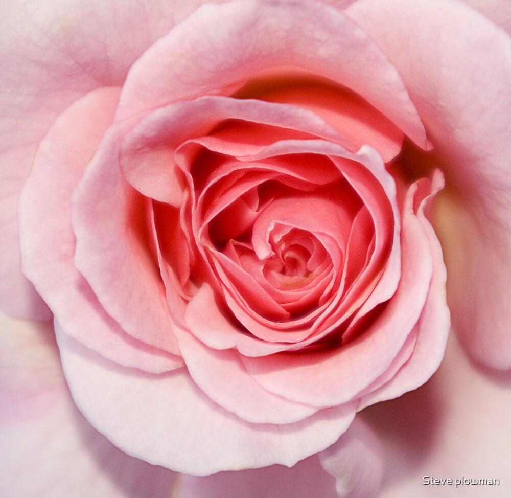 Soft Pink by Steve plowman