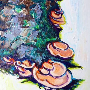 Oyster Mushrooms by CXPRESSIONS