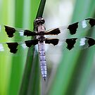 Twelve-spotted Skimmer by mc27