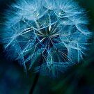 Soft'n Blue by Johanne Brunet