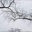 no leaves by anaivette64
