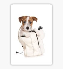 Jack Russell Terrier puppy in a bag Sticker