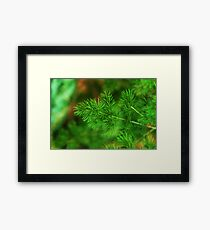 ECOLOGY Framed Print