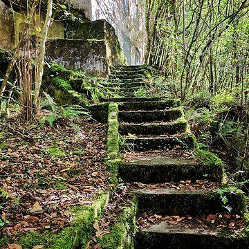 Steps at Fragas da Eume by alschni