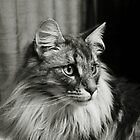 Norwegian Forest Cat Mono by Carol Bleasdale