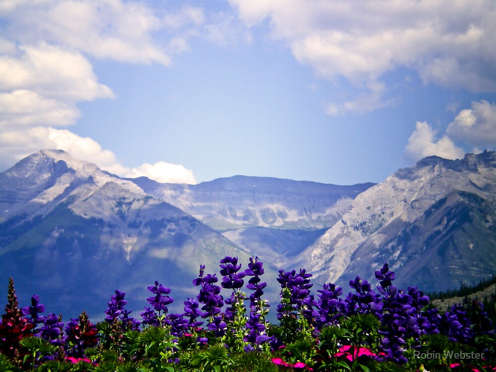 View from the Patio III...Mountains Calling by Robin Webster
