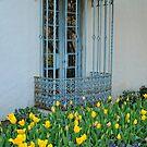 Window Garden by Colleen Drew