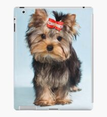 Yorkshire terrier puppy iPad Case/Skin