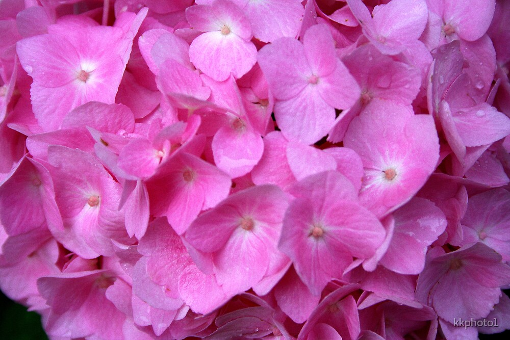 A Sea Of Pink by kkphoto1