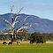 December Avatar Challenge: Victorian Countyside :))