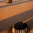 Stumps and Stripes.. by Paul Moore