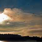 Flocking Seagulls!  by NeilAlderney