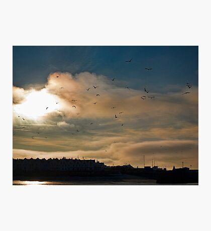 Flocking Seagulls!  Photographic Print
