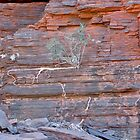 WA_Kalijini National Park_Kalimina Gorge_Tree by Kay Cunningham
