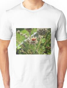 Beetle climbing on a dried chives flower Unisex T-Shirt
