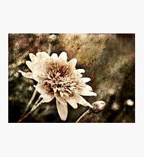Flower Grunge Photographic Print