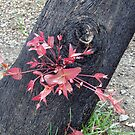 Regrowth in Red by jstephen