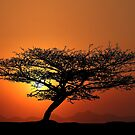 Tree at sunrise by Mugsy
