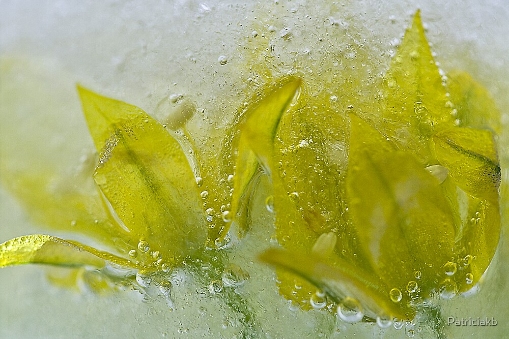 Iced yellow flowers.... by Patriciakb