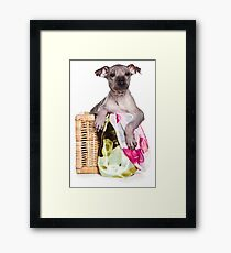 Hairless Dog puppy Framed Print