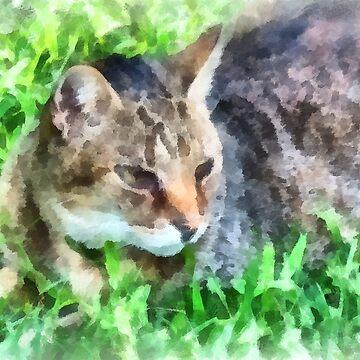 Tabby Cat Closeup by SudaP0408