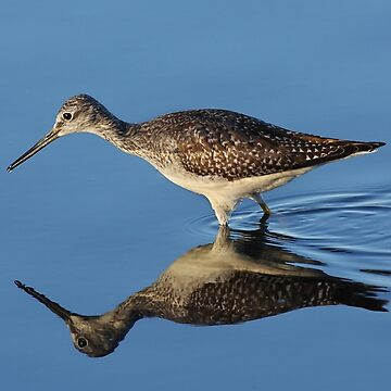 Greater Yellowlegs by darby8