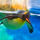 Penguin Underwater by TJ Baccari Photography