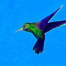 Humming Bird by James Watson