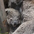 Koala's by supermimai