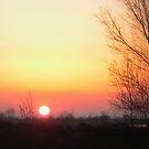 Morning Sun by ienemien