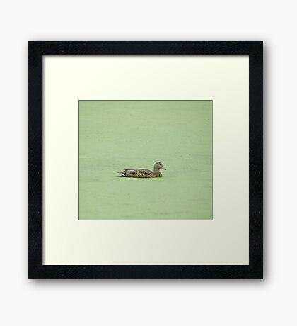 A Day At The Algae Spa Framed Print