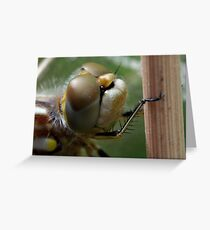 Variegated Meadowhawk, Immature Female, Close Crop of Eyes 1 Greeting Card