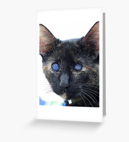 Kitty Bear, AKA: Blindy Greeting Card