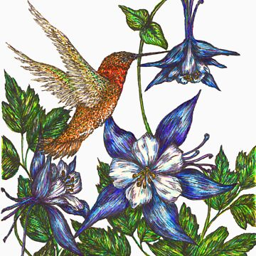 Columbine with Rufous Hummingbird by artbyjehf