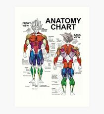 Exercise Muscle Guide - Anatomy Chart - Super SS Art Print