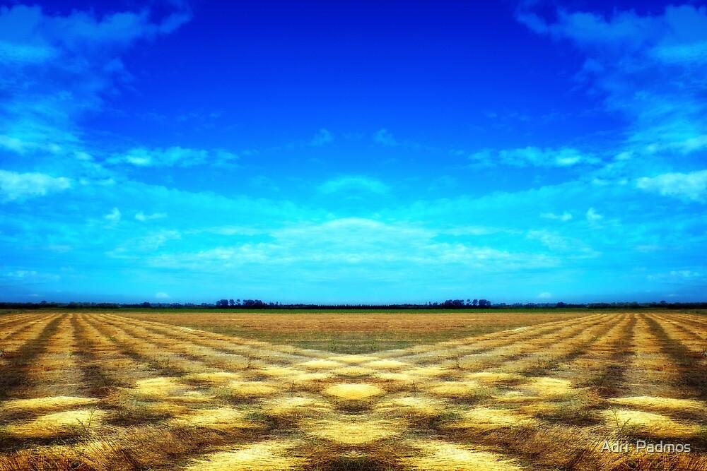 flax harvest by Adri  Padmos
