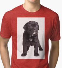 Black Cane Corso puppy Tri-blend T-Shirt