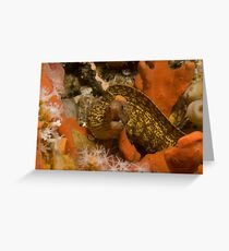Sieve-Patterned Moray Greeting Card