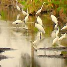 Storks and Egrets Watercolor: Survival   by Elizabeth Rodriguez