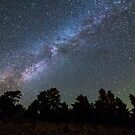 Perseid Meteor by Bo Insogna