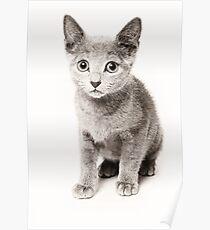 cute fluffy kitten Poster