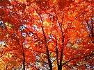 Soooo Autumn by NatureGreeting Cards ©ccwri